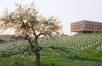 aussenansicht_mit_baum_im_fruehling_ehrenhausen_loisium_wine_spa_resorts_