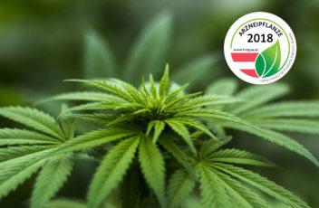 cannabis_arzneipflanze2018_presse